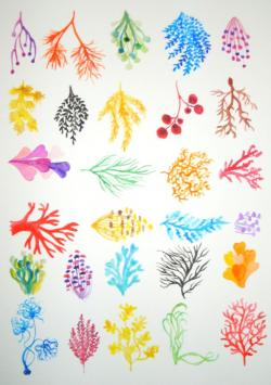 Coral Reef clipart simple
