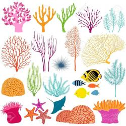 Coral clipart organism