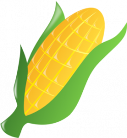 Cornfield clipart ear corn