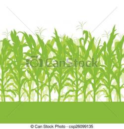 Cornfield clipart corn stock