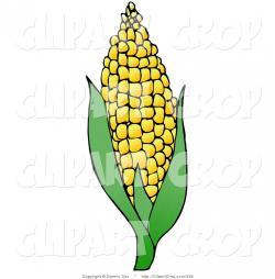 Cornfield clipart corn husk