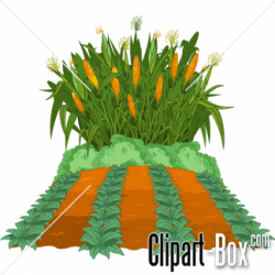 Cornfield clipart agriculture
