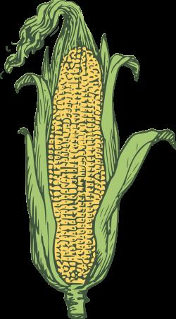 Corn clipart multi colored