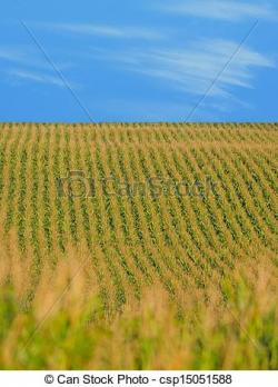 Cornfield clipart vineyard
