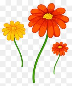 Cosmos clipart marigold
