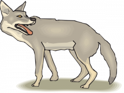 Jackal clipart coyote