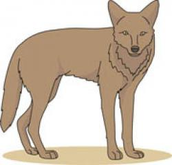 Coyote clipart animated
