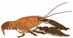 Crawfish clipart crustaceans
