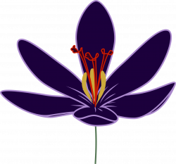 Crocus clipart big flower