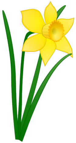 Daffodil clipart yellow flower