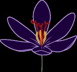 Crocus clipart flower blossom