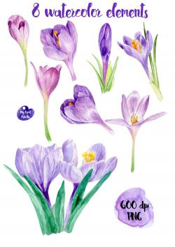 Crocus clipart may flower