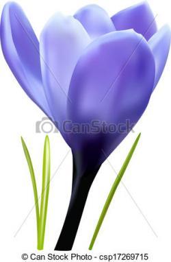 Crocus clipart realistic flower