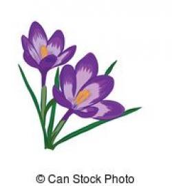 Crocus clipart saffron flower