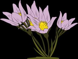 Crocus clipart wild flower