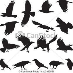 Crow clipart australian