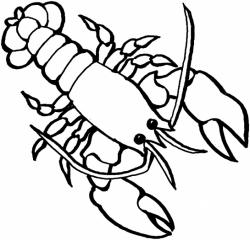 Drawn lobster outlines