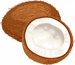 Coconut clipart cute