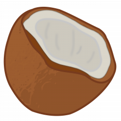 Coconut clipart transparent