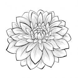 Drawn elower dahlia