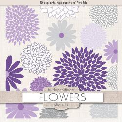 Chrysanthemum clipart lavender flower