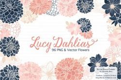 Dahlia clipart chrysanthemum