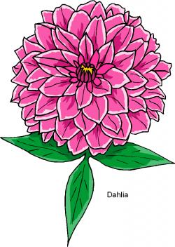 Chrysanthemum clipart dahlia