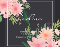 Dahlia clipart