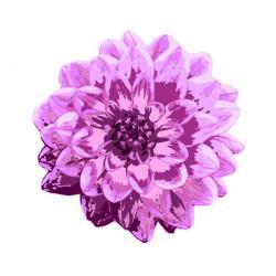 Dahlia clipart purple flower