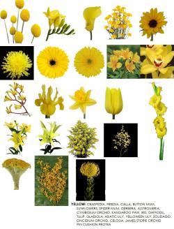 Yellow Flower clipart september flower