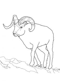 Dall Sheep clipart black and white