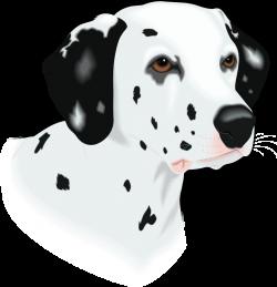 Dalmatian clipart head