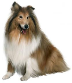 Collie clipart realistic dog