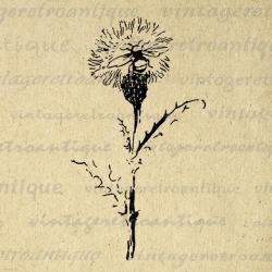 Dandelion clipart vintage