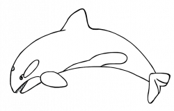 Orca clipart antarctic animal