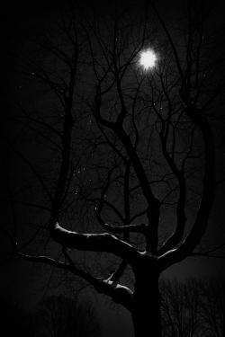 Dark Wood clipart moonlight