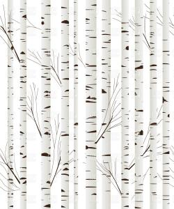 Birch clipart woodland tree