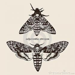Deaths Head Moth clipart hand