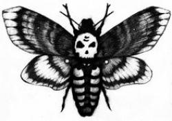 Deaths Head Moth clipart