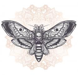 Deaths Head Moth clipart lace