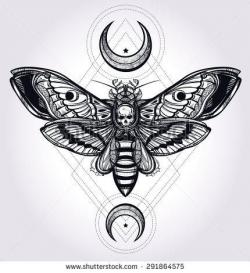 Deaths Head Moth clipart sternum