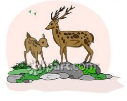 Buck clipart fawn