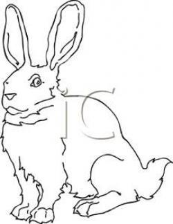 Jack Rabbit clipart rubbit
