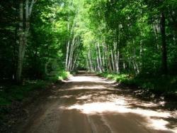 Dirt Road clipart woods