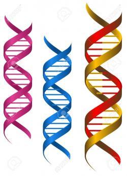 Molecule clipart dna structure
