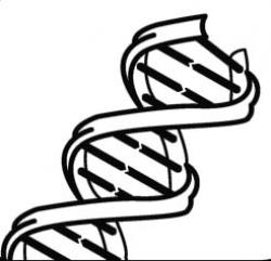 DNA Structure clipart