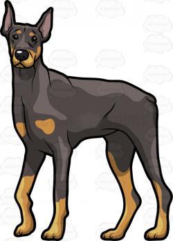 Doberman Pinscher clipart guard dog