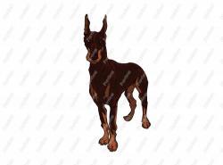 Doberman Pinscher clipart real dog