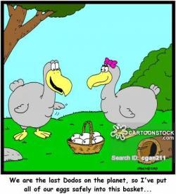 Dodo clipart funny