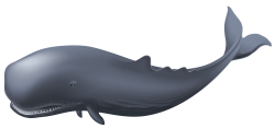Sharkwhale clipart whake